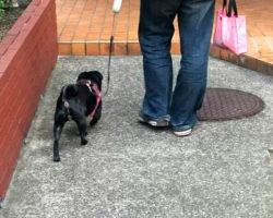 大規模修繕でペット(愛犬)に対するトラブルを防ぐための方法とは?